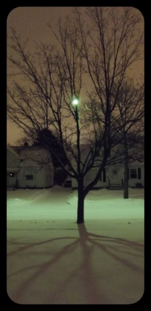 Winter Tree Shadow Before Dawn